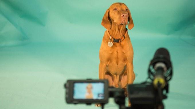 Dog audition image